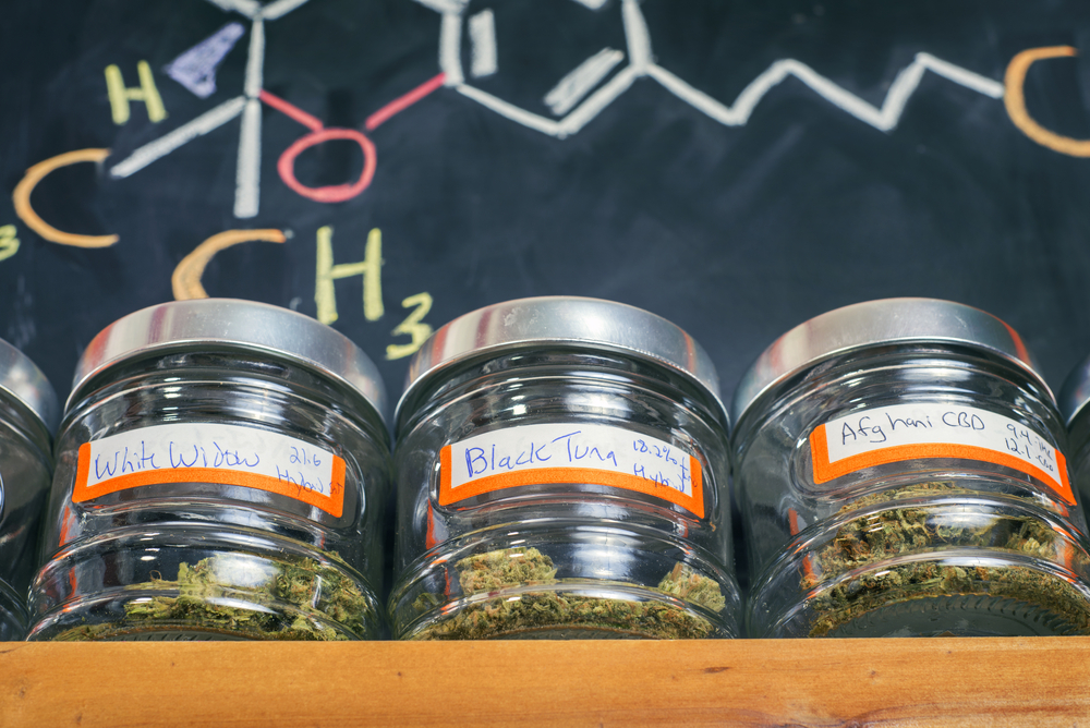 Do You Want to Become A Certified Budtender?