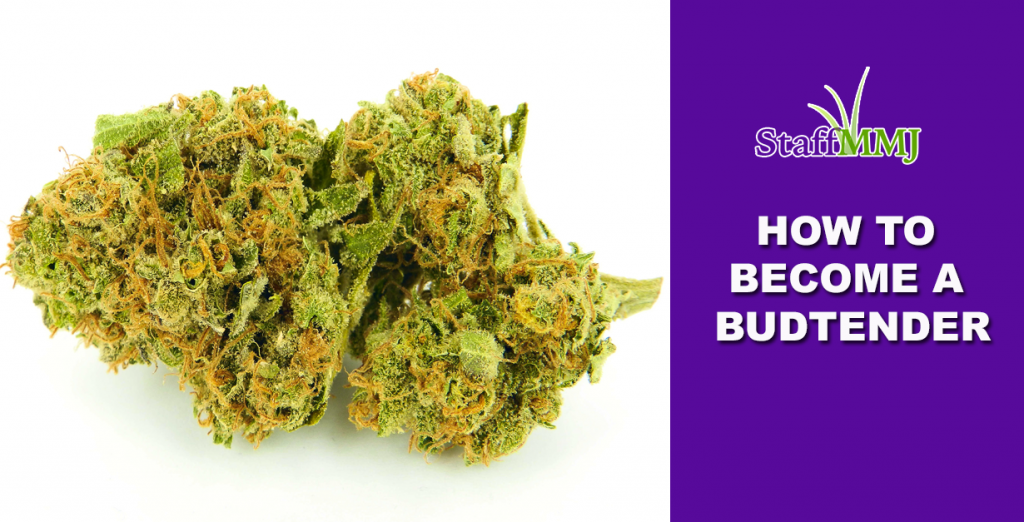 How to Become a Budtender